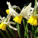 Pflanzzeit für Blumenzwiebeln